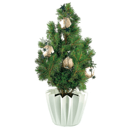 Sapin Etoiles douces 20-30 cm, avec emballage individuel